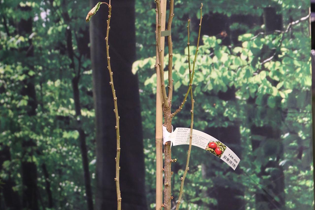 gødning af bærbuske